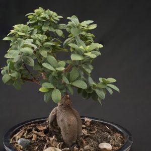 Take Proper Care Of Your Bonsai Tree