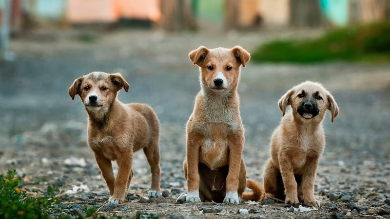 Dog Food Recommendations From Veterinarians
